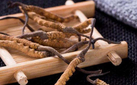 Đông trùng hạ thảo chất lượng 100% nguồn gốc thiên nhiên