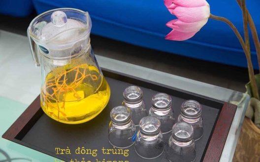 Nghiên cứu tổng quan chu trình sống và các bào tử của nấm đông trùng hạ thảo